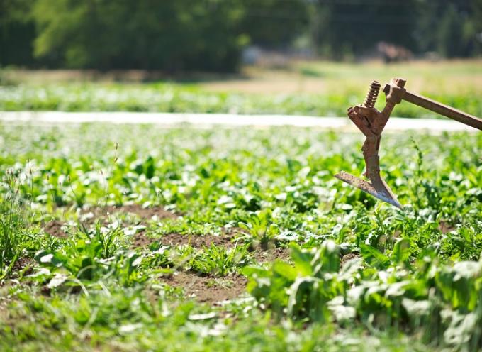 Αλλαγές στις ημερομηνίες υποβολής των αιτήσεων για το πρόγραμμα των νέων γεωργών
