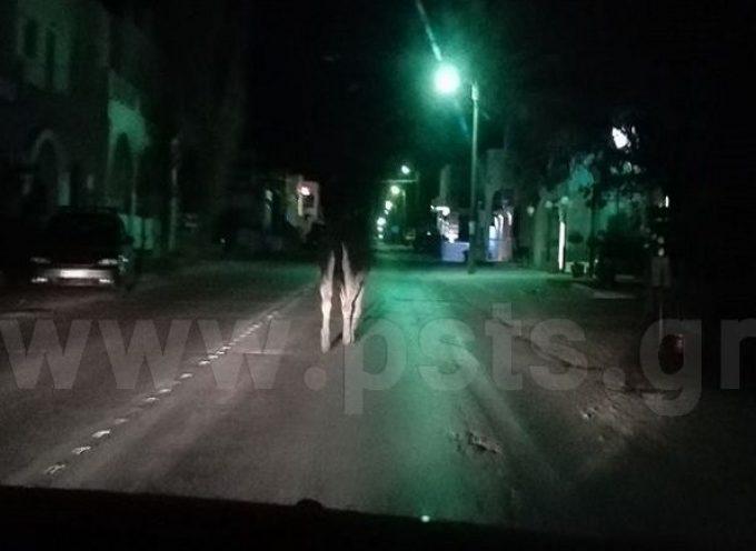Βίντεο: Ξενύχτης…γάιδαρος κόβει βραδινές βόλτες στον Περιφερειακό της Παροικίας Πάρου!