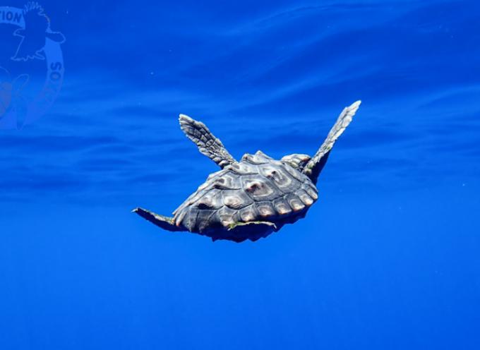 Ο μικρός Οδυσσέας ταξιδεύει ξανά στη θάλασσα της Νάξου