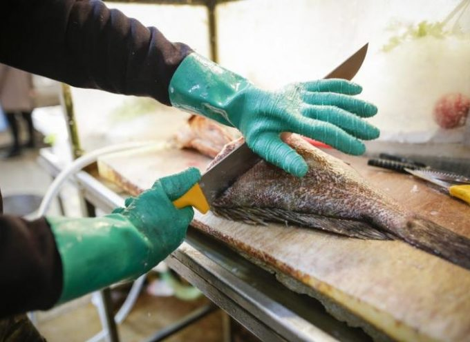 Τοξικοί εισβολείς στο Αιγαίο! Επικίνδυνα είδη ψαριών από την Ερυθρά Θάλασσα