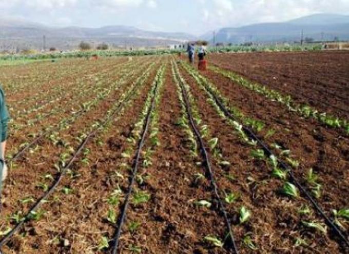 Αποζημιώσεις 7 εκατ. ευρώ από τον ΕΛΓΑ σε αγρότες και κτηνοτρόφους