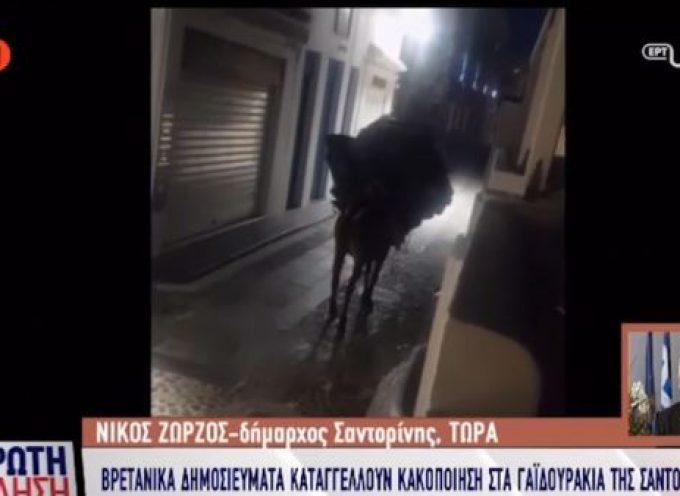 ΒΙΝΤΕΟ:Ο Δήμαρχος Θήρας στην ΕΡΤ για την κακοποίηση γαΪδουριού στη Σαντορίνη