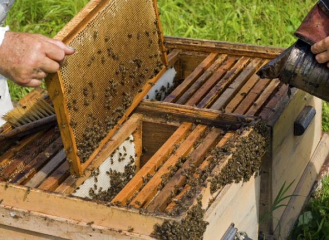 Συνεργασία της Περιφέρειας με το Γεωπονικό Πανεπιστήμιο Αθηνών, για την αντιμετώπιση των προβλημάτων της μελισσοκομίας στις Κυκλάδες