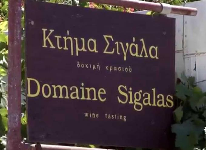 Κτήμα Σιγάλα: Οι φετινές τιμές των σταφυλιών