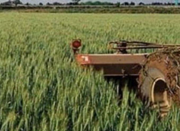 Αποζημιώσεις 38,5 εκατ. € από τον ΕΛΓΑ σε αγρότες και κτηνοτρόφους