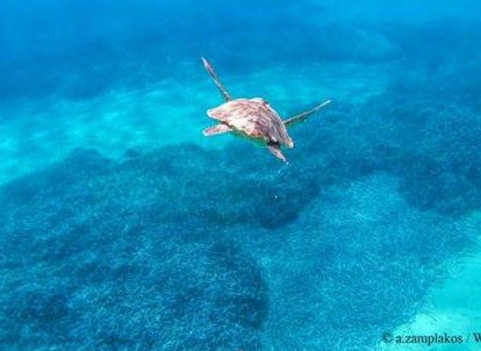 Συντονισμένη Περίθαλψη Τραυματισμένης Θαλάσσιας Χελώνας στη Σύρο