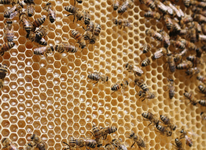 Εσπερίδα με θέμα τον εντοπισμό και αντιμετώπιση των μελισσοκομικών προβλημάτων στις Κυκλάδες