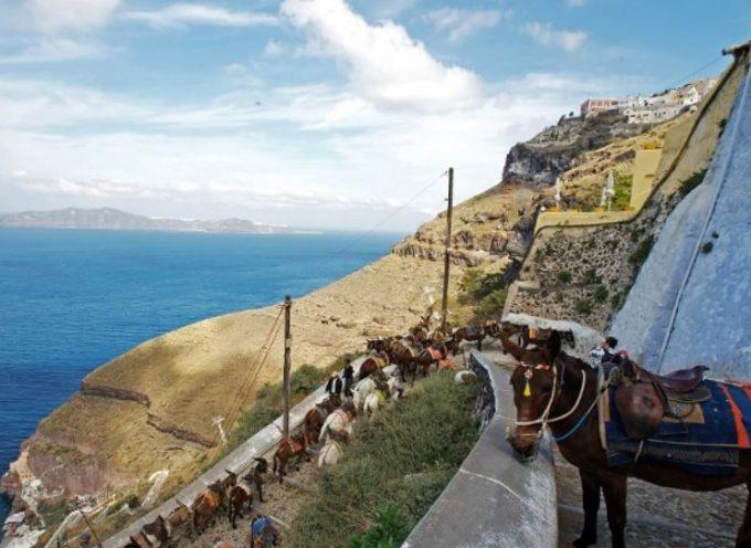Daily Mail: Η Ελλάδα απαγορεύει στους υπέρβαρους τουρίστες να καβαλάνε γαϊδουράκια