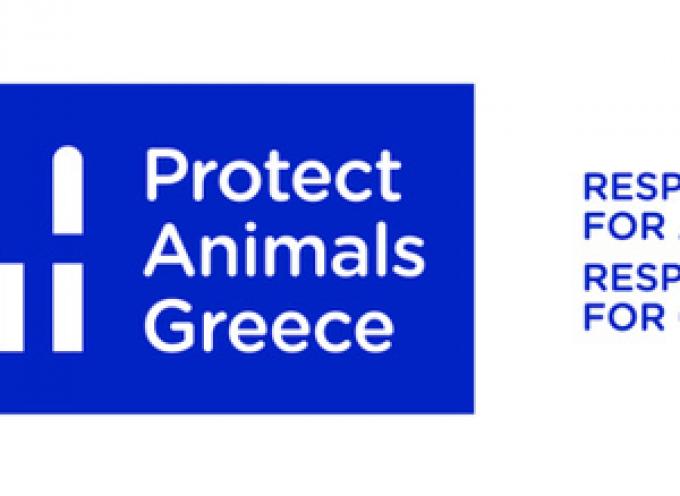 Πρόγραμμα στείρωσης αδέσποτων σκύλων στη Σαντορίνη από την Protect Animals Greece