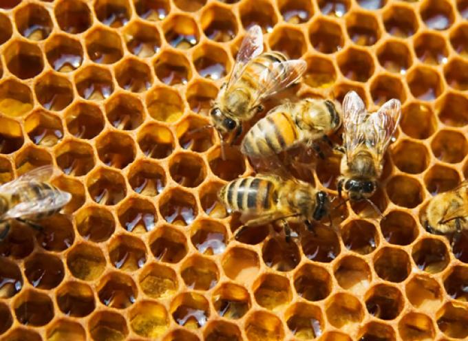 Αναφορά Βουλευτών Κυκλάδων του ΣΥΡΙΖΑ για τη στήριξη των Μελισσοκόμων στις Κυκλάδες
