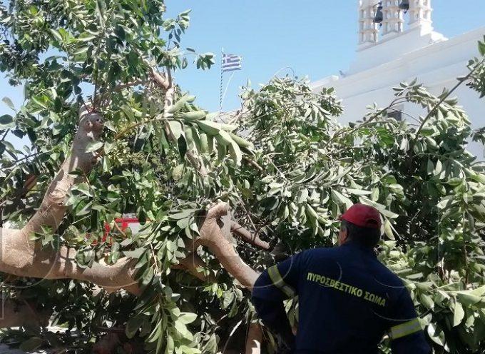 Πάρος: Δέντρο έπεσε στην είσοδο της Εκατονταπυλιανής και πλάκωσε άνθρωπο!!