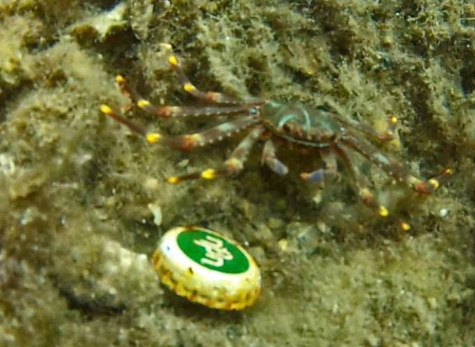 «Dive In Action»: «Βγάζουμε από την ζωή μας το πλαστικό μιας χρήσης»