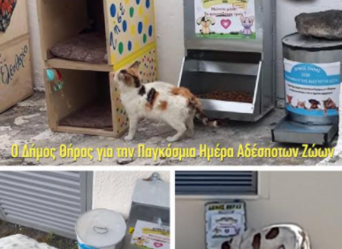 Το μήνυμα του Δήμου Θήρας για την παγκόσμια ημέρα αδέσποτων ζώων